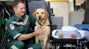 Guide dogs/ ambos pic